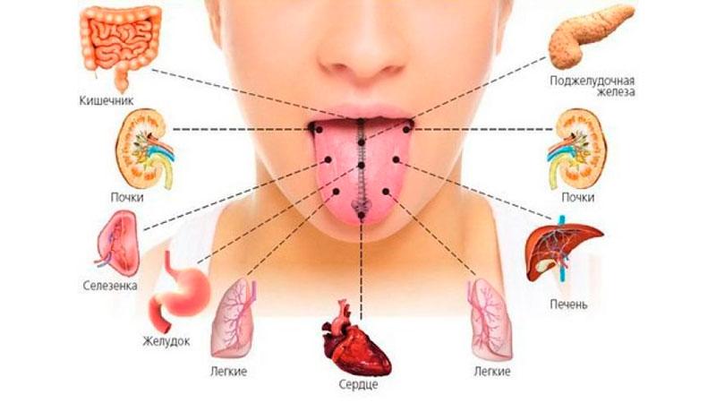 проекция органов на языке