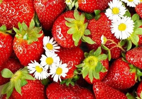 Клубника с цветами