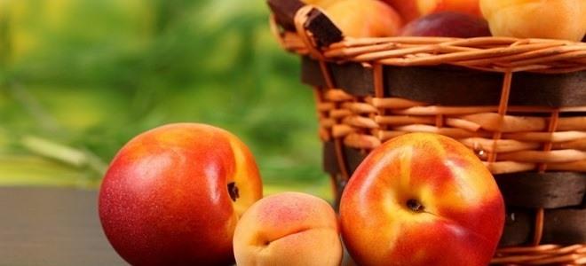 Персики и абрикосы