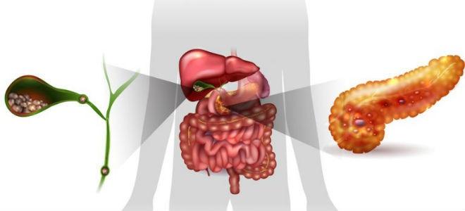 Уплотнения поджелудочной железы